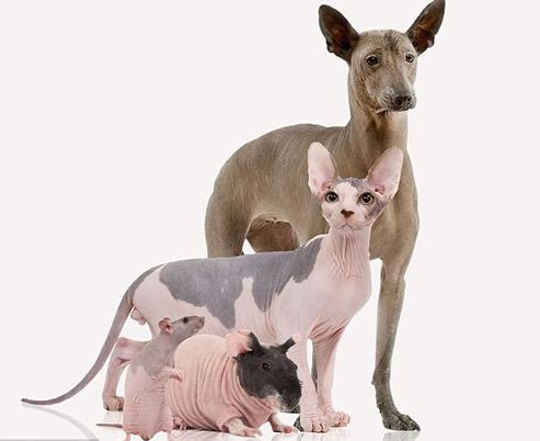 最萌动物瑜伽图