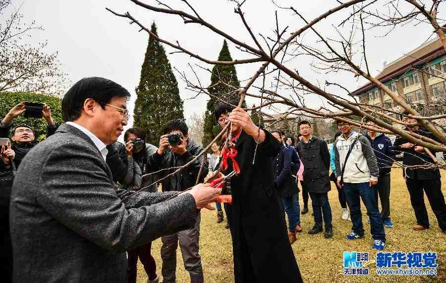 """天津大学""""牛顿苹果树""""将扎根新校区"""