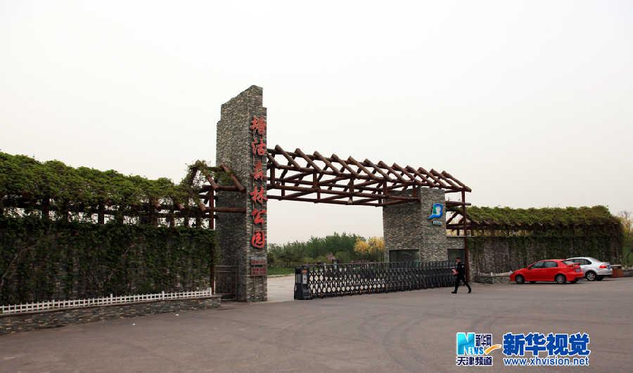 """天津滨海塘沽森林公园——盐碱滩上的""""绿色明珠"""""""