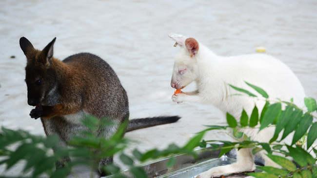 """天津动物园新动物""""十一""""正式与游客见面"""