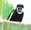 動物園添新丁