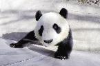 动物园新熊猫馆亮相