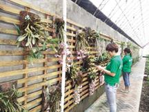 蓟州果园开张纳客 花草展持续至10月