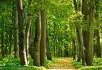 蓟州区去冬今春造林4.08万亩