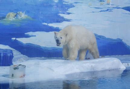 """天津极地海洋公园建""""极地冰品屋""""为动物消暑"""