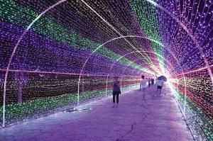 玫瑰海洋场景丰富 蓟州灯光节持续至9月5日