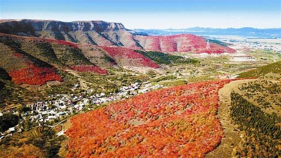 紅葉似火滿山頭