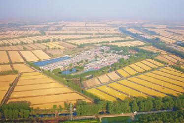 天津寶坻慶豐收 用水稻譜寫農田華章