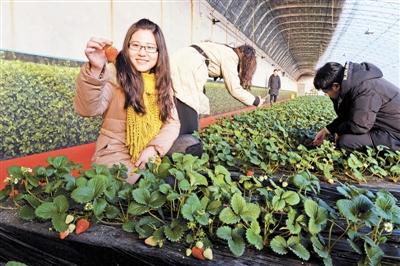 漢沽(gu)草莓文化旅游節下(xia)月啟(qi)動