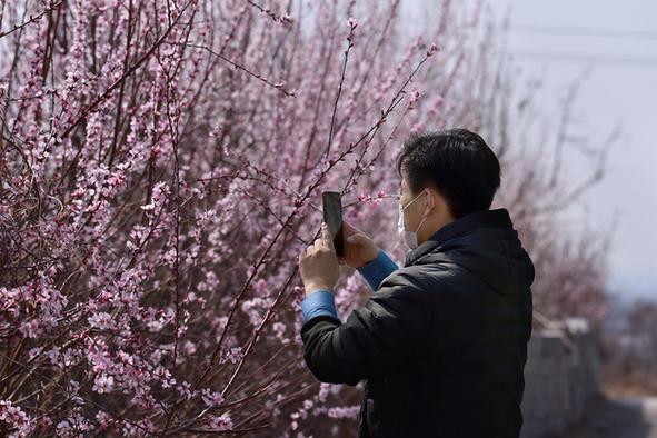 春(chun)到薊州