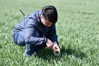 氣象(xiang)服務保障春季農業生(sheng)產