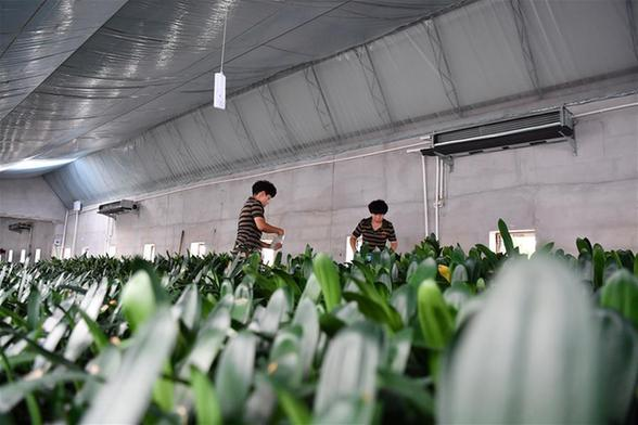 天津:環境整治 鄉村振興