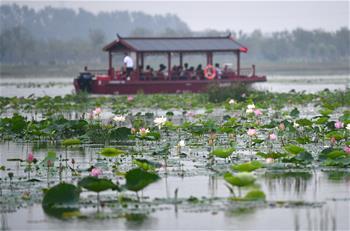 天津:曙光水鎮展現美麗鄉村
