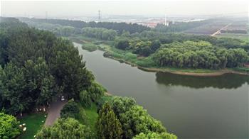 天津武清:濕地生態美