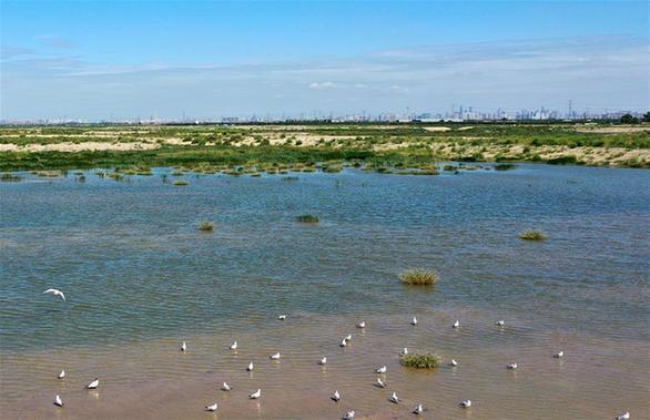 魚塘變濕地 生態修復美