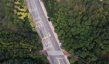 全球綠色城市:中新天津生態城
