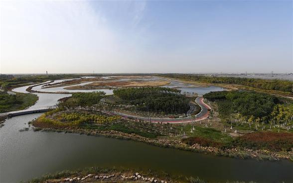 鹽鹼荒灘變身濕地公園