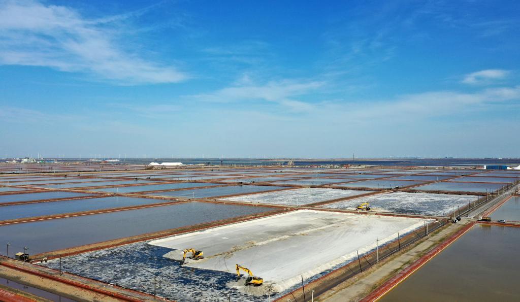 天津:春季收鹽忙