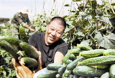 露地蔬菜採摘上市